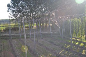 cosecha-2013_15 _