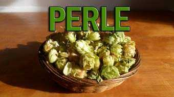 variedad-perle _