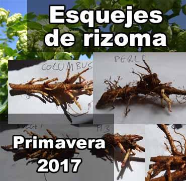 esquejes-de-rizoma-lupulo-foto-portada-2017