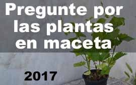 plantas en maceta-2017