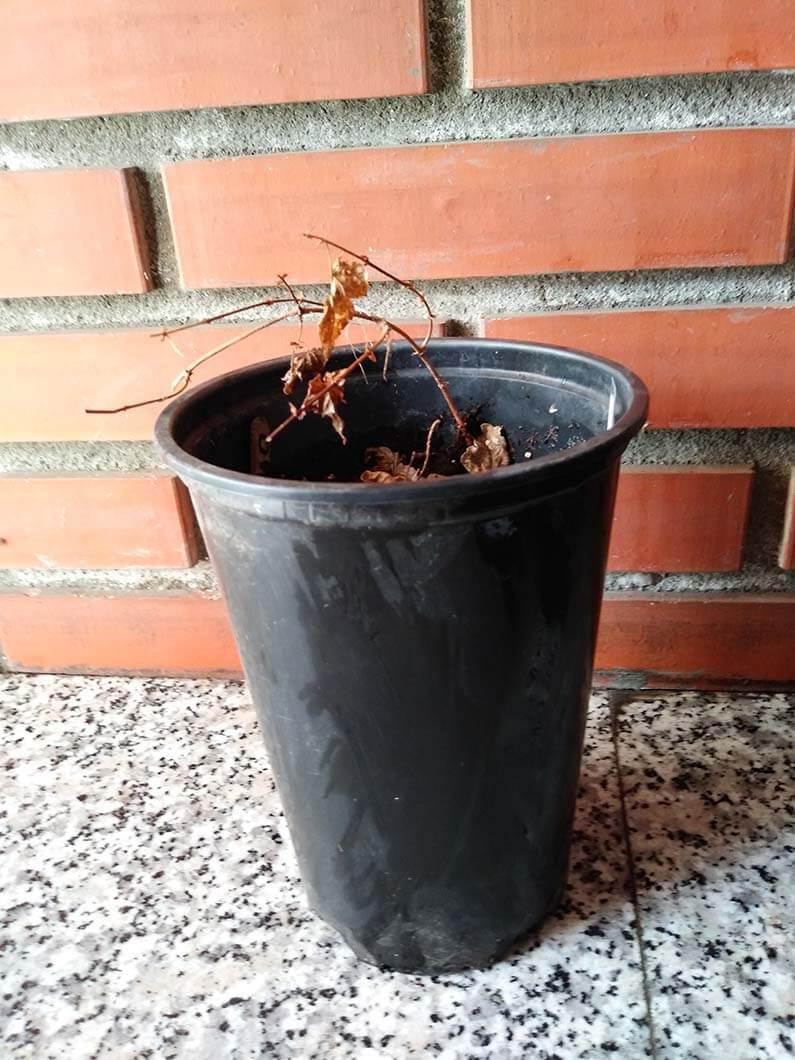 Cascade planta en maceta venta de l pulo for Planta perenne en maceta de invierno