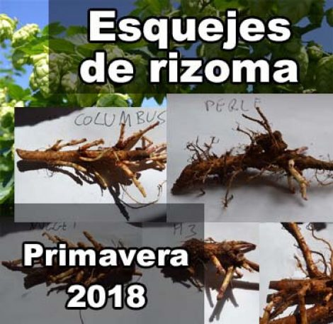 esquejes-de-rizoma-lupulo-foto-portada-2018-