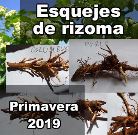 esquejes de rizoma 2019
